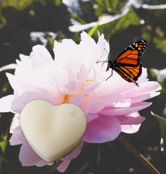Peony Butterfly